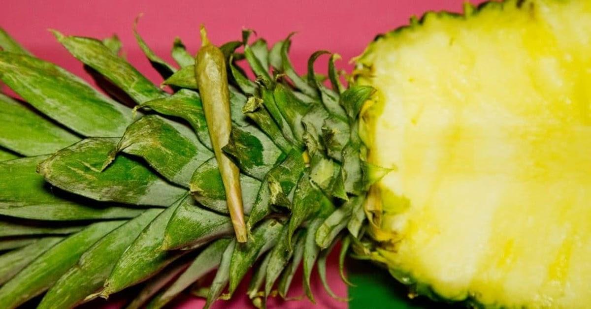 Cannabis Strain - Pineapple Express Strain Information