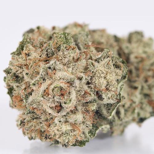 Original Glue Marijuana Strain