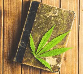 cannabis-101
